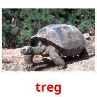 treg picture flashcards