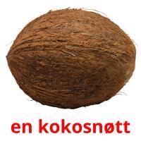 en kokosnøtt picture flashcards