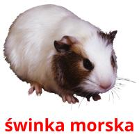 świnka morska picture flashcards