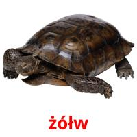 żółw picture flashcards