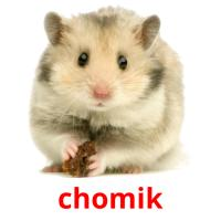 chomik picture flashcards