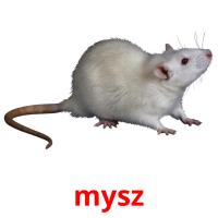 mysz picture flashcards