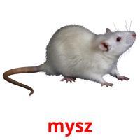 mysz picture flashcards
