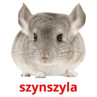 szynszyla picture flashcards