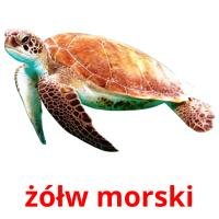 żółw morski picture flashcards