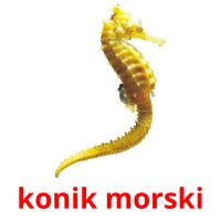 konik morski picture flashcards