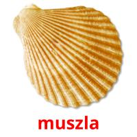 muszla picture flashcards