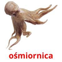 ośmiornica picture flashcards