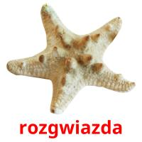rozgwiazda picture flashcards