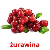 żurawina picture flashcards