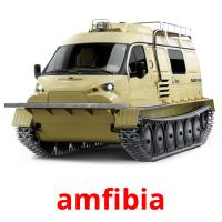 amfibia picture flashcards