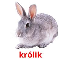 królik picture flashcards