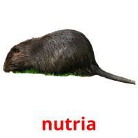 nutria picture flashcards