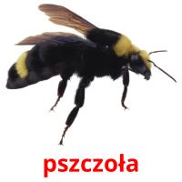 pszczoła picture flashcards