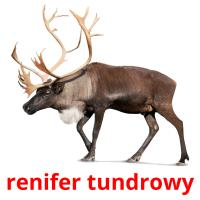 renifer tundrowy picture flashcards