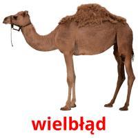 wielbłąd picture flashcards