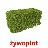 żywopłot picture flashcards
