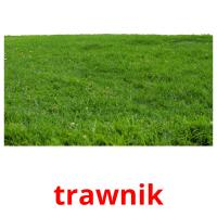 trawnik picture flashcards