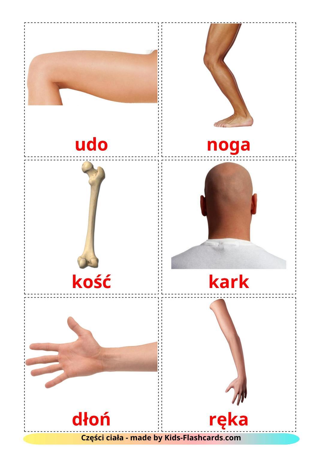 Body Parts - 26 Free Printable polish Flashcards