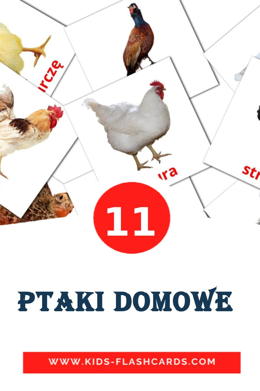 11 Ptaki domowe  Picture Cards for Kindergarden in polish