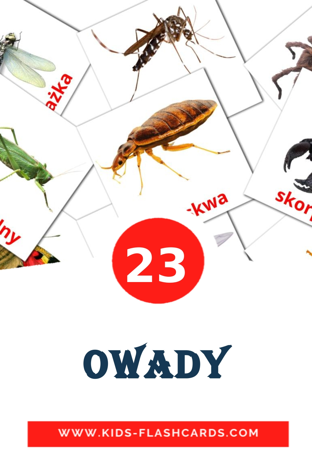 23 Owady Picture Cards for Kindergarden in polish