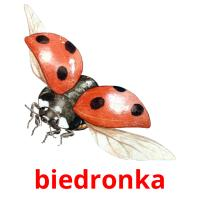 biedronka picture flashcards