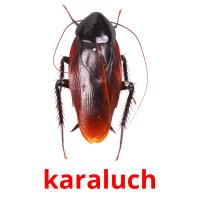 karaluch picture flashcards