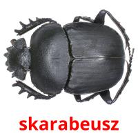 skarabeusz picture flashcards