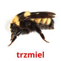 trzmiel picture flashcards