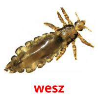 wesz picture flashcards