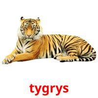 tygrys picture flashcards