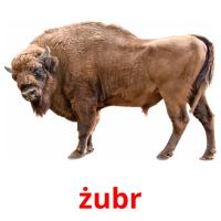żubr picture flashcards