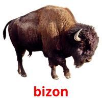 bizon picture flashcards