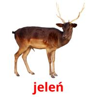 jeleń picture flashcards