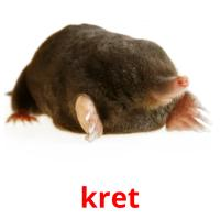 kret picture flashcards