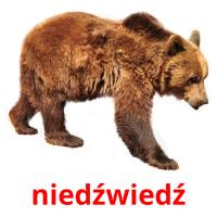 niedźwiedź picture flashcards