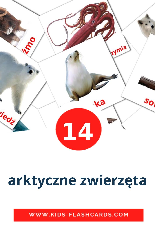 14 arktyczne zwierzęta Picture Cards for Kindergarden in polish