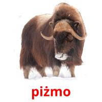 piżmo picture flashcards