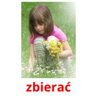 zbierać picture flashcards
