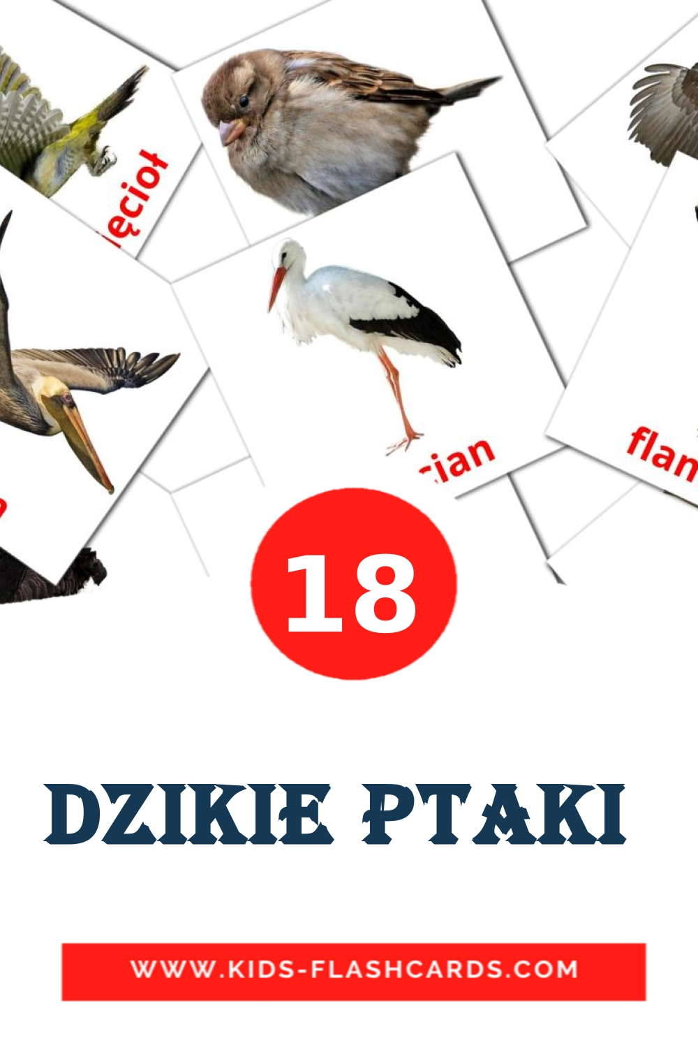 Dzikie ptaki  - free cards in polish