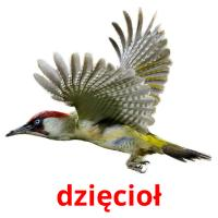 dzięcioł card for translate