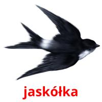 jaskółka picture flashcards