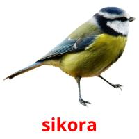 sikora picture flashcards