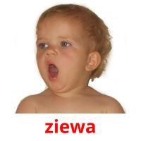 ziewa picture flashcards