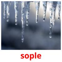 sople picture flashcards