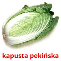 kapusta pekińska picture flashcards
