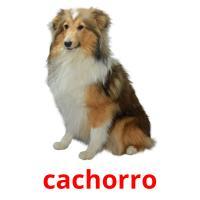 cachorro picture flashcards