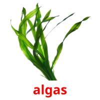 algas picture flashcards