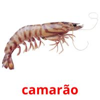 camarão picture flashcards