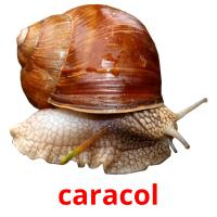 caracol picture flashcards